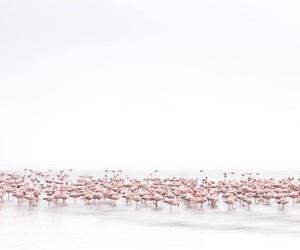flamingo, grey, and pink image