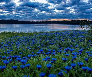 blue, beautiful, and flowers image