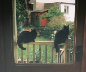 cat, vintage, and black image