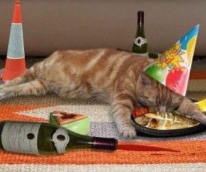 birthday, happy, and cat image