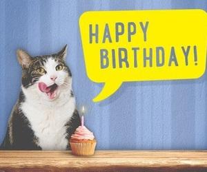 birthday, cat, and cupcake image