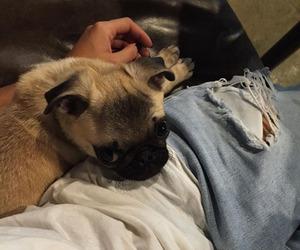animal, dog, and love image