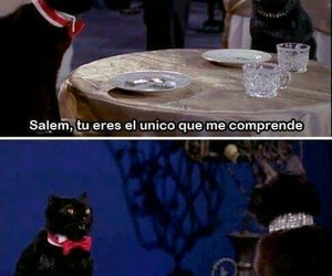 salem, cat, and funny image