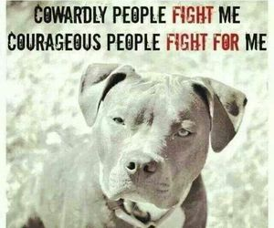 pitbull and quote image