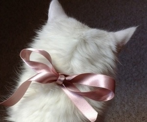 cat, pink, and white image