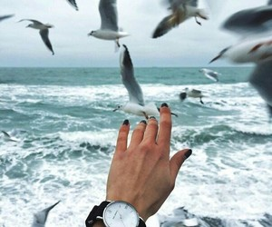 sea, bird, and hand image