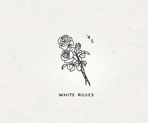 rose, white, and aesthetic image