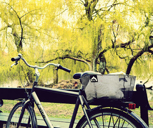 bicycle, denmark, and picnic image