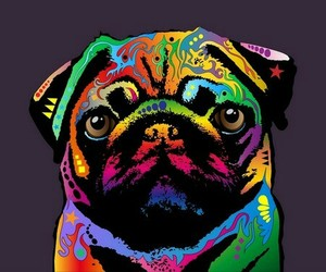 pug, dog, and colors image