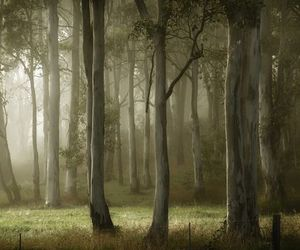 nature, improbable, and forest image