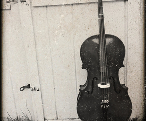 black and white and cello image