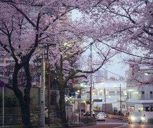 city, spring, and japan image