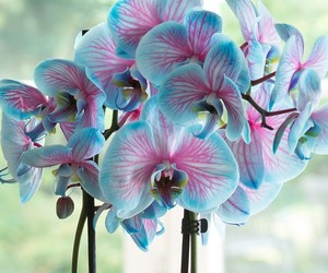 blue, orchid, and pink image