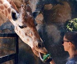 frasi, giraffa, and italia image