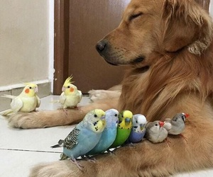 adorable, birds, and pets image
