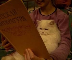cat, sad, and russian literature image