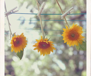nature, cute, and sunflowers image