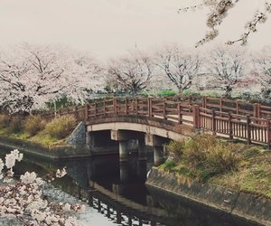 japan, blossom, and japanese image