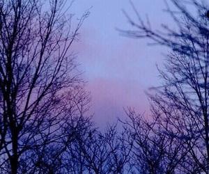 moon, trees, and purple image
