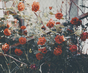 indie, nature, and roses image