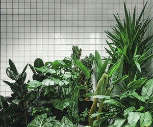 green, plants, and aesthetic image
