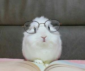 animal, book, and bunny image