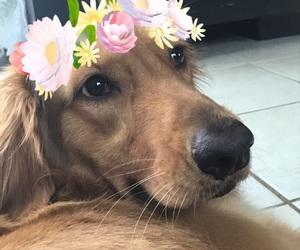 animals, dog, and edit image
