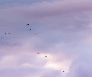 headers, purple, and sky image