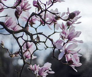 floral, flowers, and magnolia image