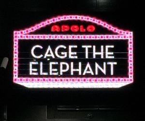 cage the elephant image