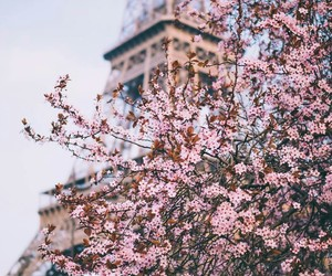 paris, flowers, and aesthetic image