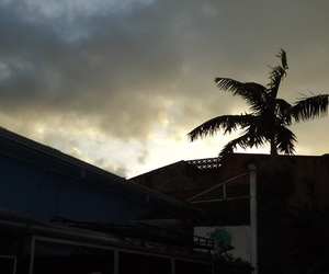 cloud, night, and palm image