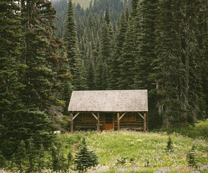 nature, forest, and cabin image