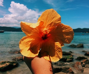 beach, brazil, and flower image
