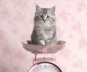 cat, beautiful, and pink image