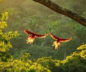 bird, nature, and jungle image