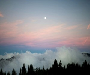 beautiful, forest, and moon image