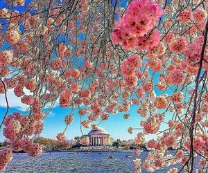 nature, travel, and flowers image