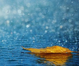 amazing pictures, photography inspiration, and leaf rain photography image