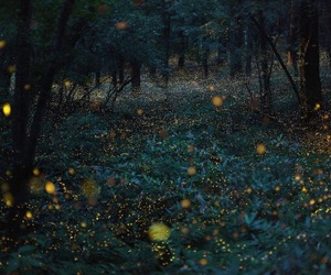 fireflies and summer image