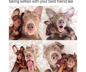 funny, dog, and best friends image