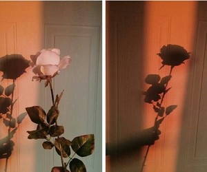 aesthetic, rose, and indie image