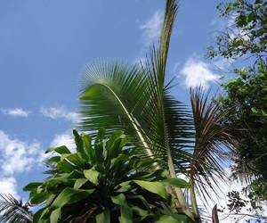 blue, palm, and tree image