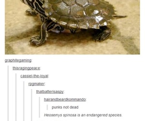 funny, punk, and turtle image