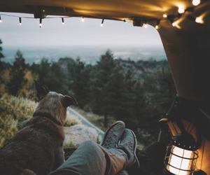 dog, nature, and light image