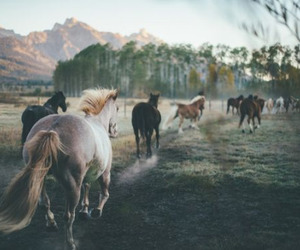 horse, wild, and nature image