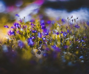 flowers, spring, and landscape image