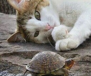 cat, animal, and turtle image