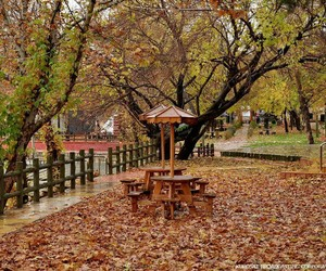 autumn, slemani, and paiz image