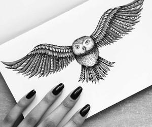 drawing, owl, and nights bird image
